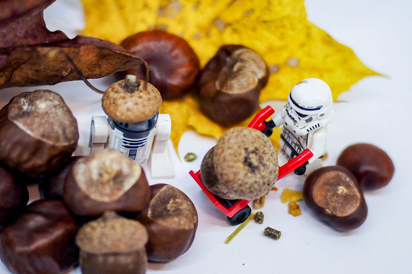 LEGO MiniStudio Autumngold Close-up Day Food Food And Drink Freshness Indoors  Legophotography Minifigures No People Ready-to-eat Star Wars Characters Studio Shot