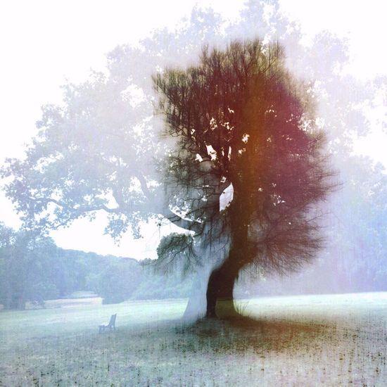 NEM Painterly TreePorn NEM Landscapes Tree Tree Porn Tree And Sky EyeEm Best Edits Editjunky NEM Submissions