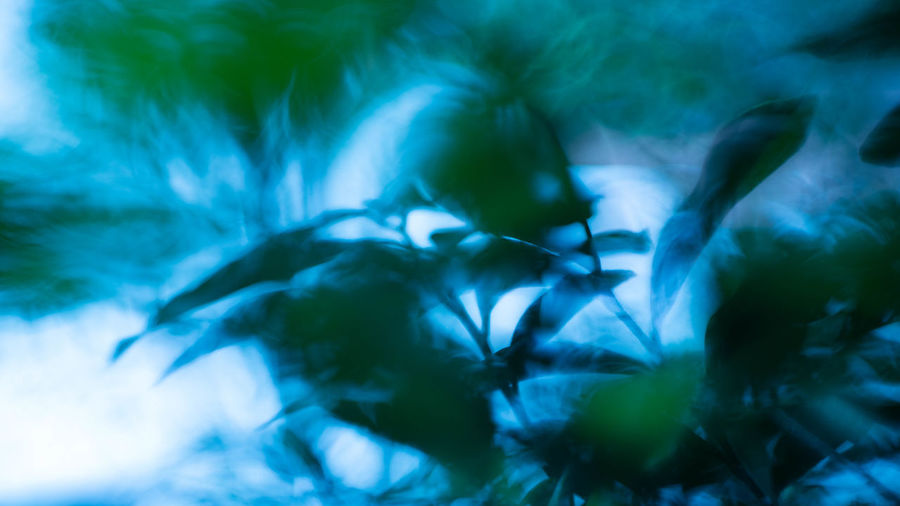 Green Multiple Layers Nature Backgrounds Beauty In Nature Blue Botany Close-up Day Flower Freshness Full Frame Growth Leaf Light And Shadow Motion Nature No People Outdoors Plant Plant Part Selective Focus Softness Tree Water