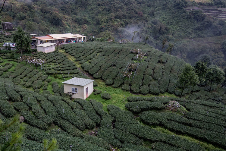 Plant Tree Growth Architecture Green Color Landscape Land Scenics - Nature Built Structure Building Exterior Building Nature Rural Scene Mountain House High Angle View Environment No People Crop  Agriculture Plantation Tea Crop Outdoors Tea Green Tea