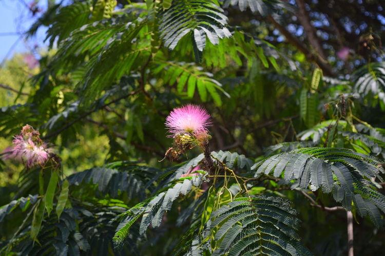 Beauty In Nature Blooming Blossom Famosa Flower Flower Head Freshness Petal Purple Having Fun Alabama Alabama Outdoors Outdoor Alabama