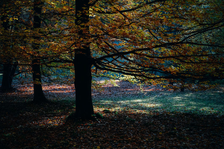 Trees growing on field in forest during autumn