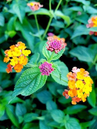 🌺🍁 First Eyeem Photo Flower Leaves Landscape Summertime Summer Views Afternoon Goodphotography Goodplace