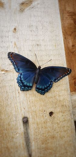 High angle view of butterfly on table