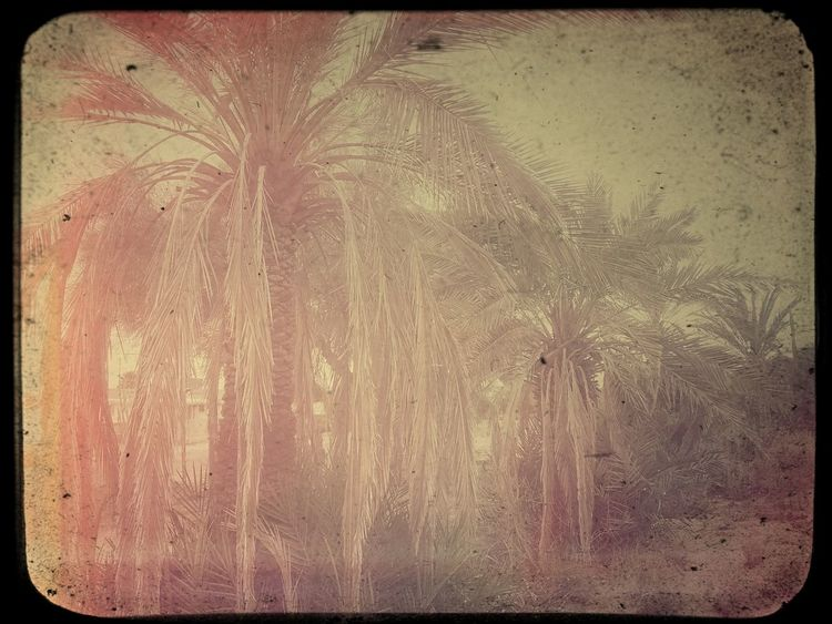 Auto Post Production Filter Backgrounds Beauty In Nature Close-up Day Environment Frame Full Frame Growth Nature No People Outdoors Palm Tree Pattern Plant Sky Textured  Textured Effect Transfer Print Tree