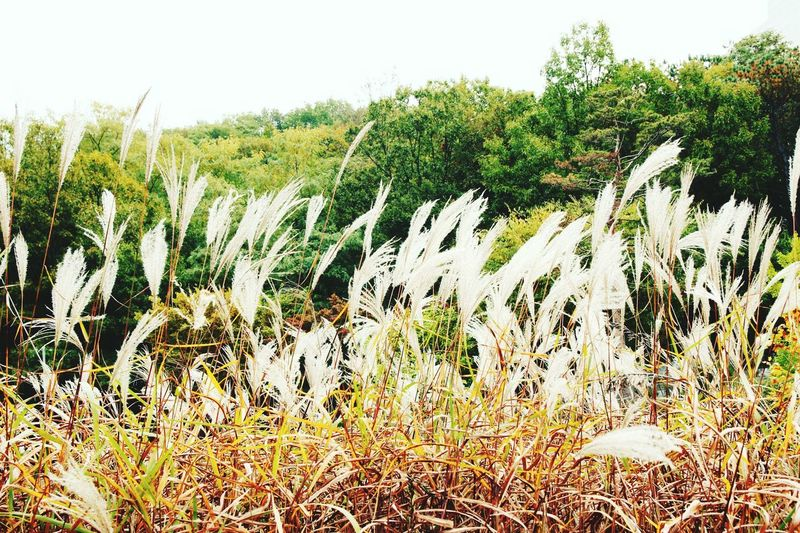 No People Nature Enjoying Life Hi! EyeEm Best Shots Beauty Fool  Korean Nature Beauty In Nature