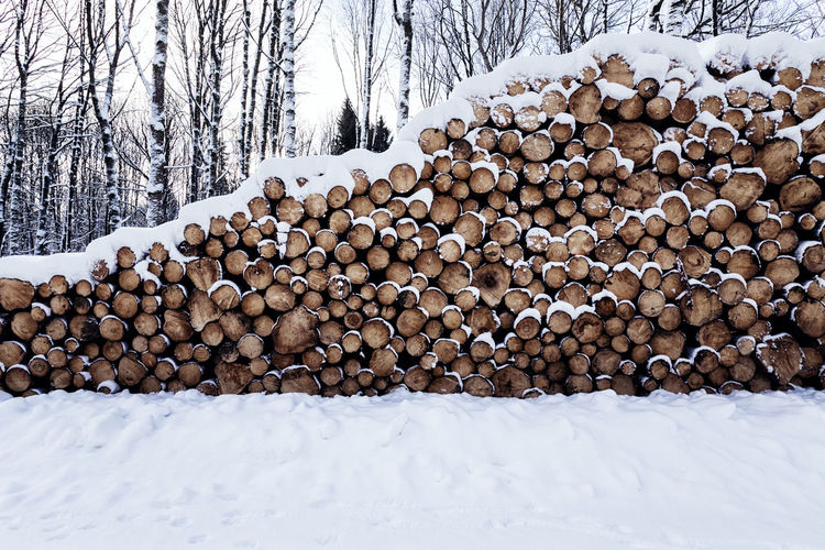 Winterland Tree Cold Temperature Snow Stack Winter Timber Log Forest Firewood Lumber Industry Wood Large Group Of Objects Deforestation Wood - Material Nature No People Abundance Land Day Woodpile