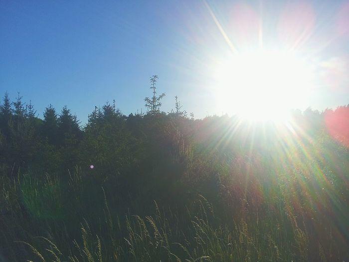 Forest Bushes Sunrise Nature Sunlight Gotlost Heart