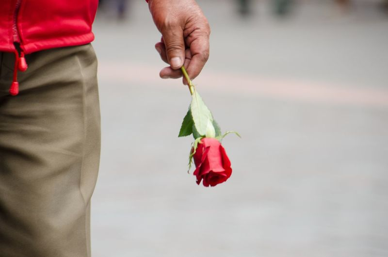 Midsection of man holding red rose while standing on road