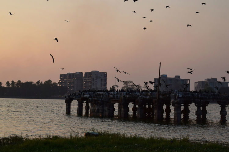 Birds flying over river with buildings in background