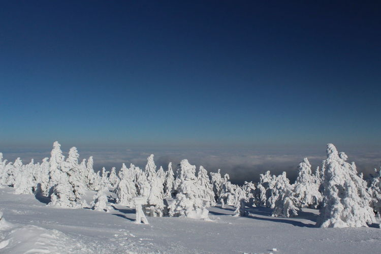 winter impressions of Nationalpark Harz Cold Temperature Snow Winter Nature Harz Brocken Trees Barks Of A Tree Sky Beauty In Nature Blue Tranquil Scene Clear Sky Scenics - Nature Tranquility Day Copy Space Landscape Environment No People Non-urban Scene White Color Travel Snowcapped Mountain