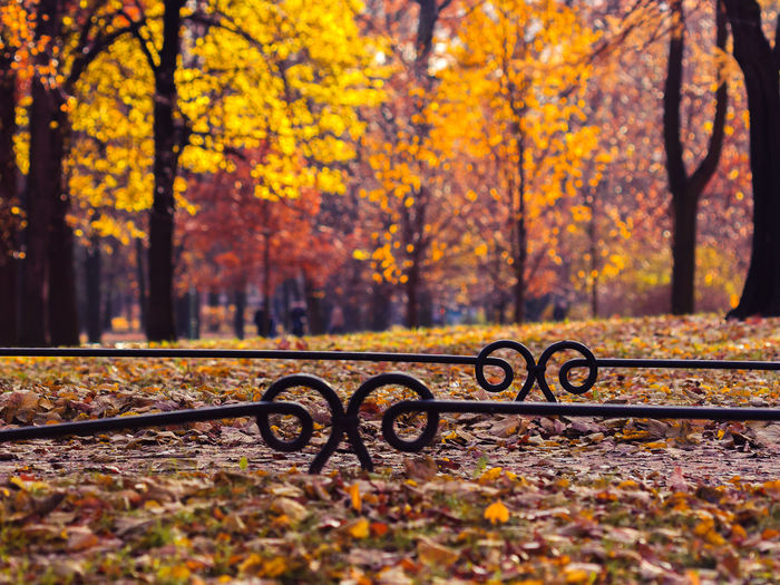 Autumn Bokeh City Landscape Fall Colors Fallen Historical Center Leaf October Orange Color Outdoors Saint Petersburg Season  Selective Focus Tavrichesky Garden Tree Yellow The Great Outdoors - 2016 EyeEm Awards 43 Golden Moments Fine Art Photography