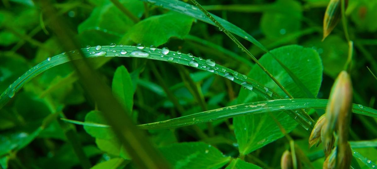 Rain Shower Beauty In Nature Close-up Drop Grass Green Color Leaf Nature No People Outdoors Plant RainDrop Water Wet