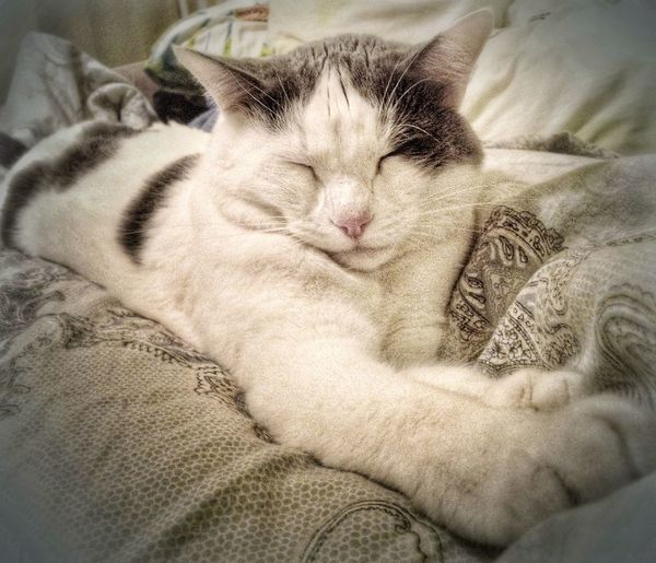 The tiger. A poket one. Superhero Domestic Domestic Cat Animal Themes Lying Down Indoors  Close-up Resting Eyes Closed