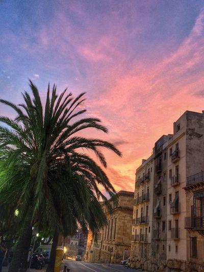 Sunset Palm Tree City Sky