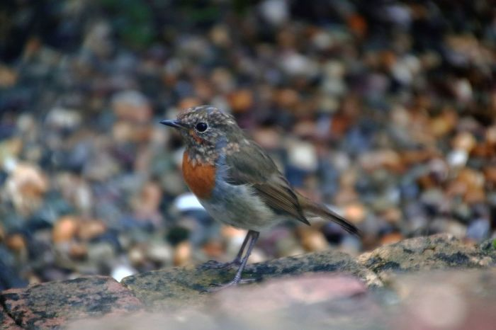Young Robin in Garden Young Robin Animal Themes Animal Wildlife Animals In The Wild Bird Close Up Close-up Curious Day Garden Garden Birds Garden Photography Nature No People One Animal Outdoors Perching Robin Robin Redbreast Selective Focus Storm Cloud Urbanwildlife Urbanwildlifephotography