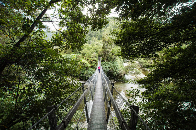 young woman walking over a bridge in the rainforest of the kaitoke regional park in new zealand Hiking Architecture Beauty In Nature Bridge Built Structure Connection Day Direction Footbridge Forest Green Color Growth Kaitoke Regional Park Nature New Zealand Outdoors Plant Rain Forest River The Way Forward Tree Water Young Woman The Great Outdoors - 2018 EyeEm Awards