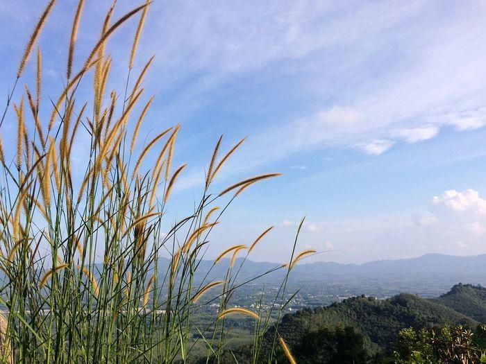 Grass on mount