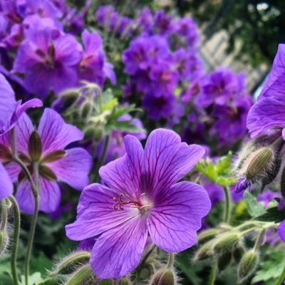 Saker jag mår bra av, del 63: Alla vackra blomsterarrangemang så här års. Nävor är en storfavorit! Självläkning Process 100sakerjagmårbraav Starkarevarjedag