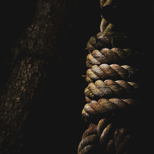 a rope swings.... the light catches the knot.... what next? Rope Drama Dramatic Light Knot Knots Knotted Rope Noose Hang Hanging Dark Imagination Fear