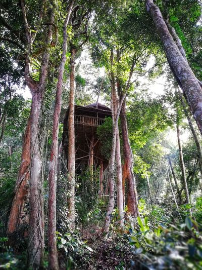 tree house Treehouse Tree House Terratreehouse Nature Photography Tropical Green Cameronhighlands Tree Water Branch Sky Tree Trunk