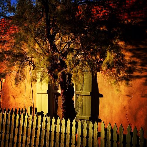 Golden Hour Tree Shadow Wall Adobe Wall Fence Warm Colors Soft Light Warm Light Stroll Strolling Around Canyon Road