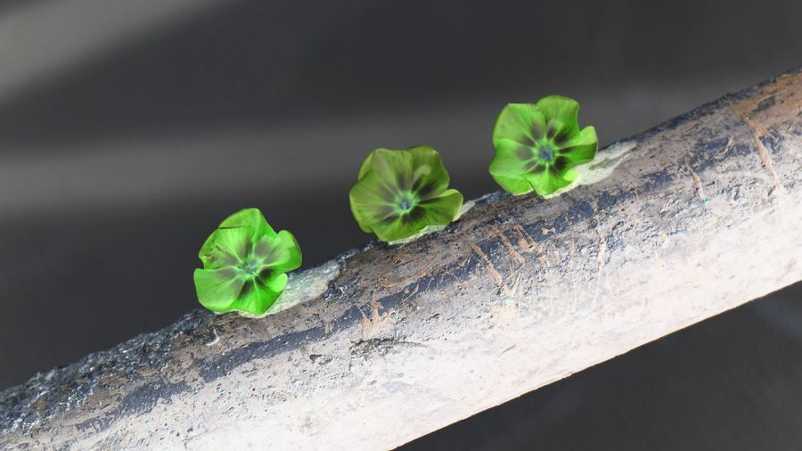 Leaf Studio