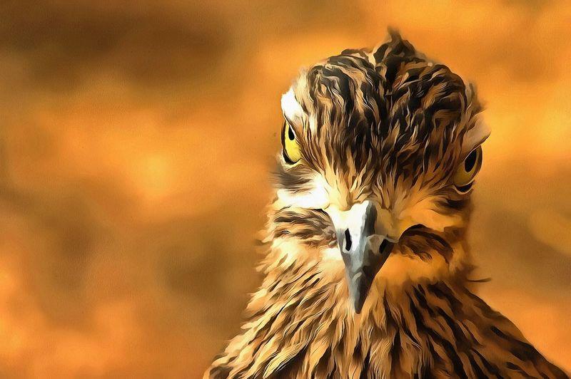 Attitude Animal Themes Beak Bird Bird Of Prey Digital Art One Animal