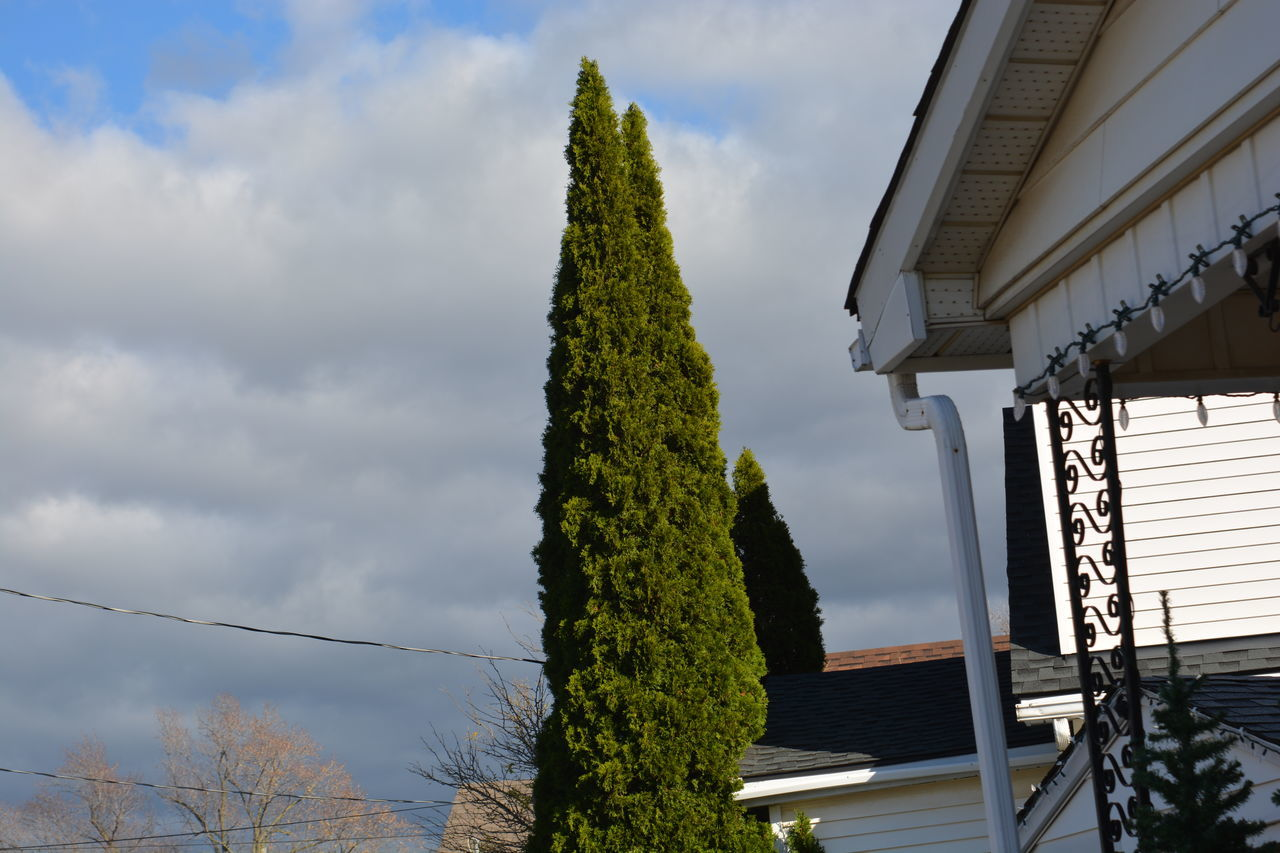 sky, tree, cloud - sky, growth, outdoors, day, plant, no people, architecture, nature, building exterior, built structure