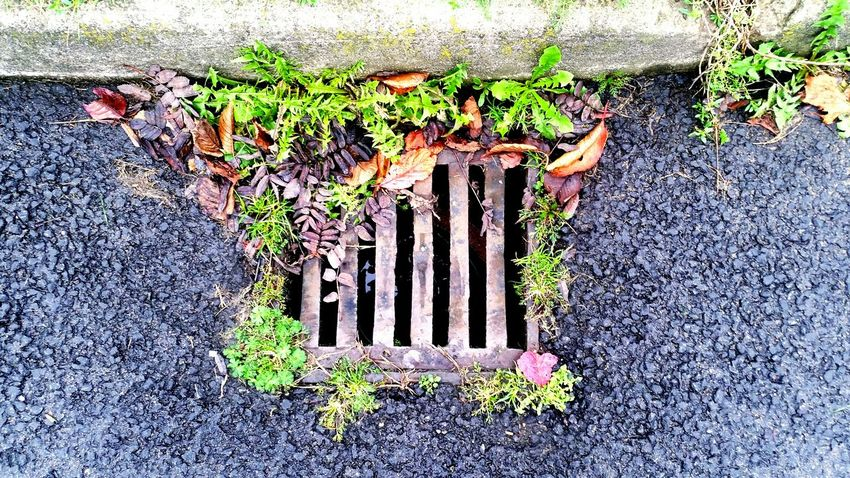 Colours around the drain. Showcase: November Autumn Collection Check This Out On The Road Something Different Beautiful Drainage On The Road Again Black Top Autumn Is Coming, Look Busy Blocking The Exit