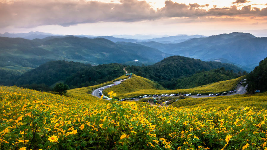 Yellow flowers growing on field against mountains