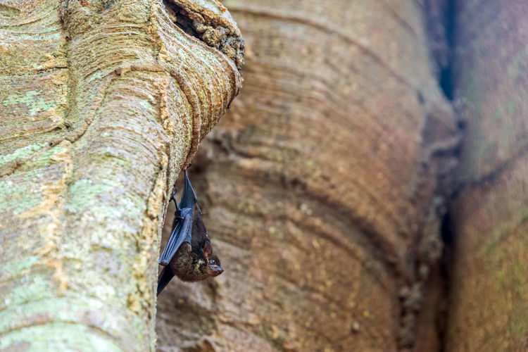 Low Angle View Of Bat On Tree Trunk