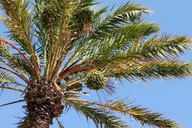 Grün zu Blau Blue Green Palm Tree Tree Low Angle View Growth Blue Nature Sky Day Clear Sky No People Beauty In Nature Branch Outdoors