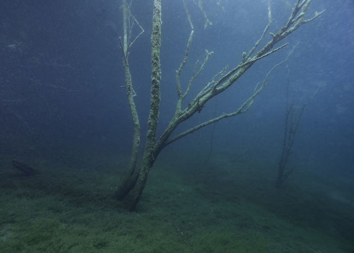 Tree in a lake under water like in a dream, Germany Dream Animals In The Wild Beauty In Nature Day Dream Scene Ecosystem  Environment Fog Foggy Green Color Growth Land Nature No People Outdoors Plant Sea Sea Life Tranquility UnderSea Underwater Water
