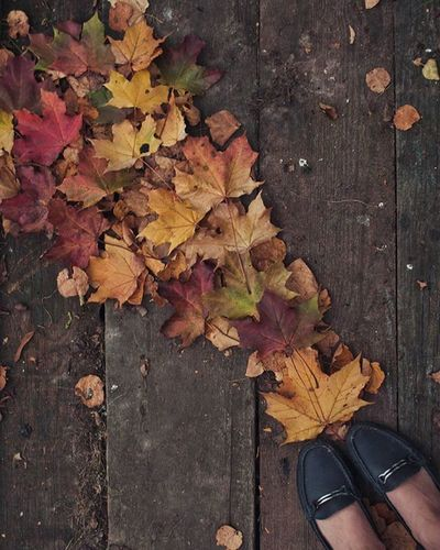 Я так безнадёжно влюблён - В вас, моя леди Осень. Когда б мы остались вдвоём, Я сердце бы кинул оземь. Я б вызвал на бой любого, Кто Вам предпочёл бы лето, Весну или зиму.🍂🍁🍁 жёлтых_листьев_настроение от @paramariba81 @manka_v_kruzhevah @shintapaly Бологое