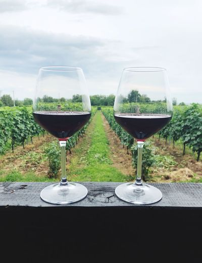 Glass Wineglass