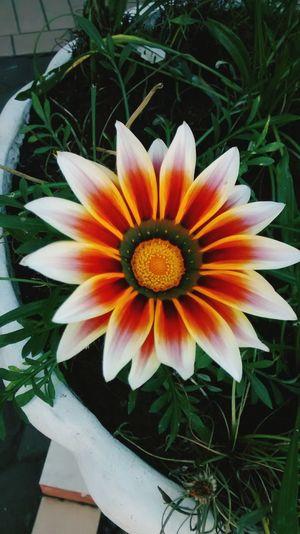A flor do seu jardim Flowers