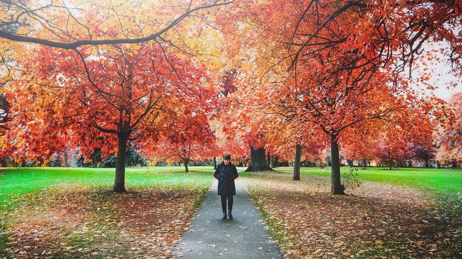 Autumn in full