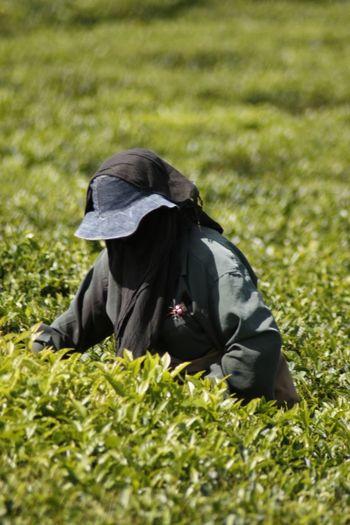 Woman on tea leaves field