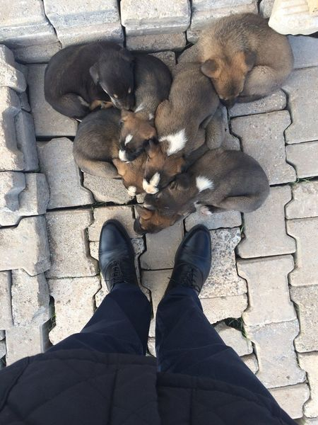 family Dogs EyeEmNewHere Human Body Part Body Part Human Leg Personal Perspective Low Section One Person Real People Shoe Standing High Angle View Shadow Nature