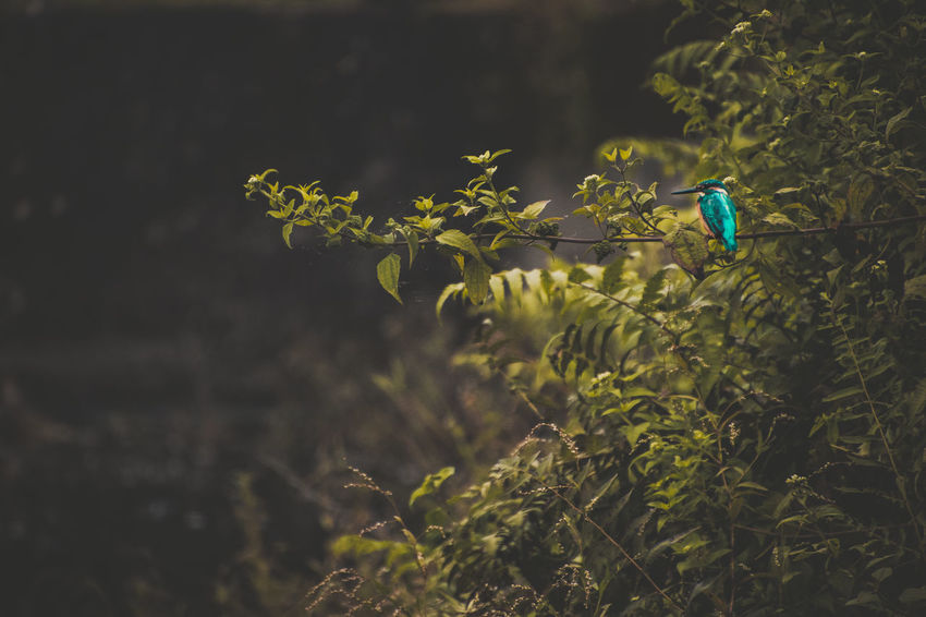 Bird Photography Kingfisher Nature Wildlife & Nature Animal Themes Animals In The Wild Beauty In Nature Bird Birds_collection Close-up Day Fragility Grass Green Color Growth Kingfisher Bird Nature No People Outdoors Perching Plant Wildlife
