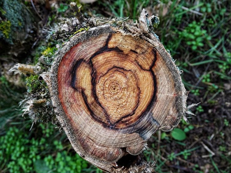 Log Timber Deforestation Close-up Wood - Material Tree Ring Tree Stump Nature Cross Section Outdoors No People Tree Trunk Day Tree Textured  Forestry Industry