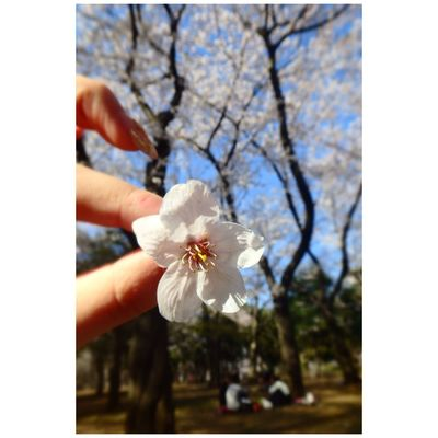 Today's Hot Look OpenEdit Cherry Blossoms tokyo yoyogipark Beautiful Flowers Enjoying Life Happy Love Relaxing Cute 🌸🌸🌸