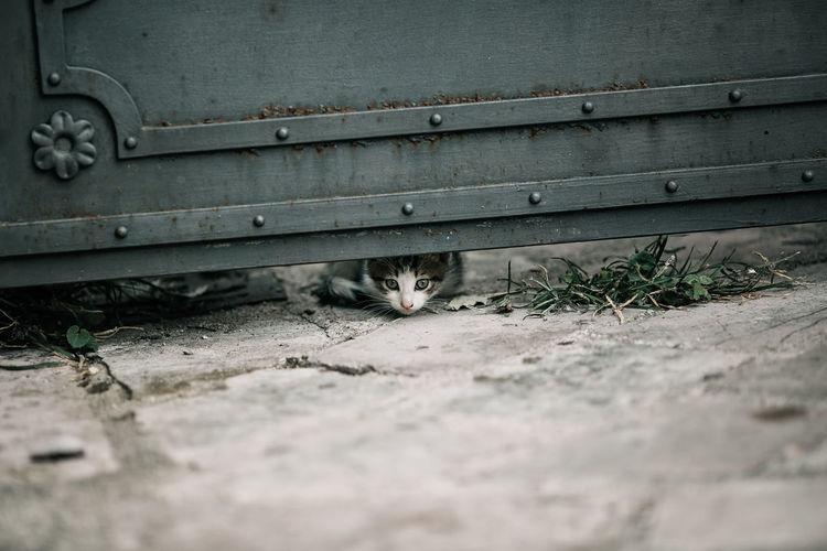 Portrait of cat relaxing
