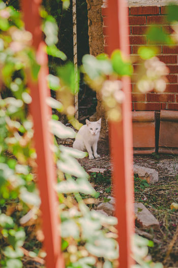 Cat sitting on metal fence