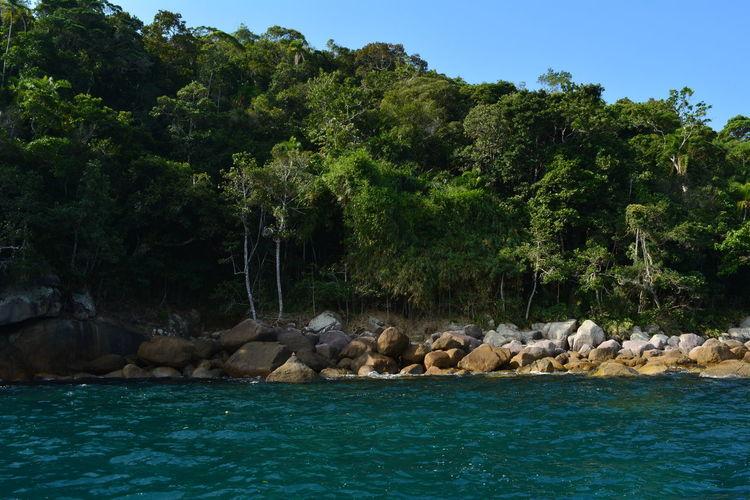 Brazil Mata Atlântica Tree Blue Sky Branck Forest Island Leaf Rocks Sky