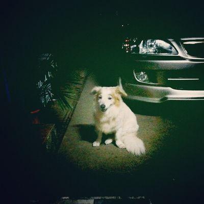นั่งจุ้มปุ๊กอยู่เพียงผู้เดียว Dog Pet13 Lomography