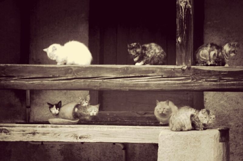 la maison des chats. Bw-collection Bw_collection Chat Cats Cat♡