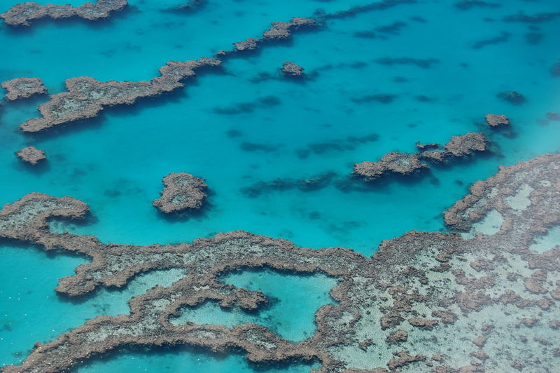 Great barrier reef. Queensland. Australia No People Water Sea Nature Blue Turquoise Colored Beauty In Nature High Angle View Day Underwater Tranquility Outdoors Scenics - Nature Land Coral Tranquil Scene UnderSea Sea Life Marine Coral Reef Great Barrier Reef Australia Queensland Ocean