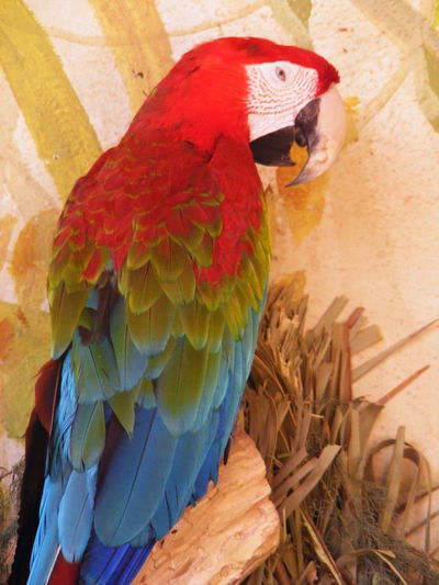Animal Themes Bird Close-up Day Domestic Animals Macaw Mammal No People One Animal Outdoors Parrot Perching